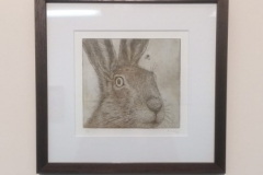 Startled Hare, 2016, Etching, Edition of 10, 25x23.5cm (Plate size 18x16.5cm). Sold 2 of 10.